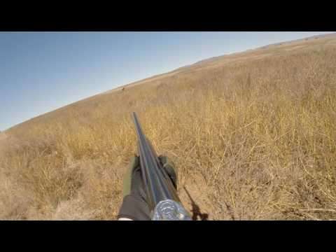 Shooting birds in SOUTH AFRICA with ARABHUNTERS