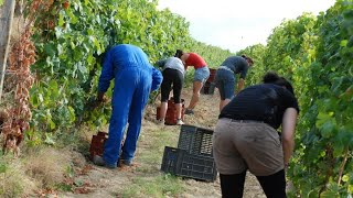 Pengalaman Work And Holiday Di Australia Kerja Di Farm (Adi Singkawang)