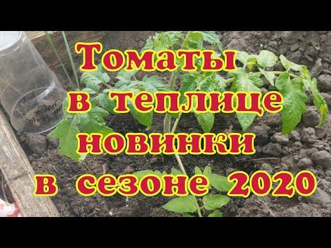 Томаты 2020// Новинки от Садов России// Томат Джек Пот//Итальянские томаты