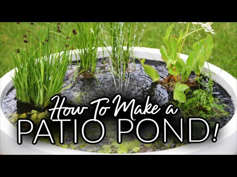 Make your very own pond in a pot backyard pond youtube for Make your own pond