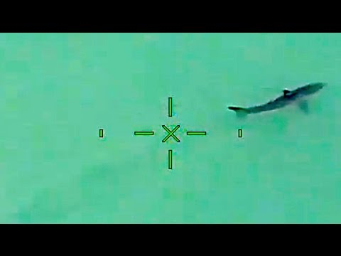 15 Sharks Spotted by OC Sheriff's Helicopter Prompts Warning From the Sky (2 of 2)