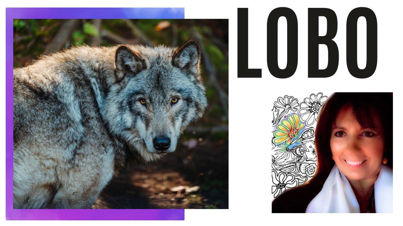 Mensaje del El LOBO como Animal de Poder, el Profesor de la Rueda Sagrada, Chamanismo. 2* Parte