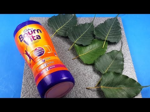 Creative Use of Peepal Leaves and Plastic Bottle to Make Awesome Craft! Home Decor StylEnrich