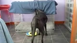 короткое но прикольное видео про собаку которая хочет спать смотреть всем