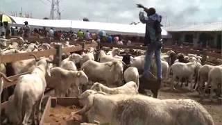 Ouverture de la foire aux moutons à l'occasion de la la fête de tabaski