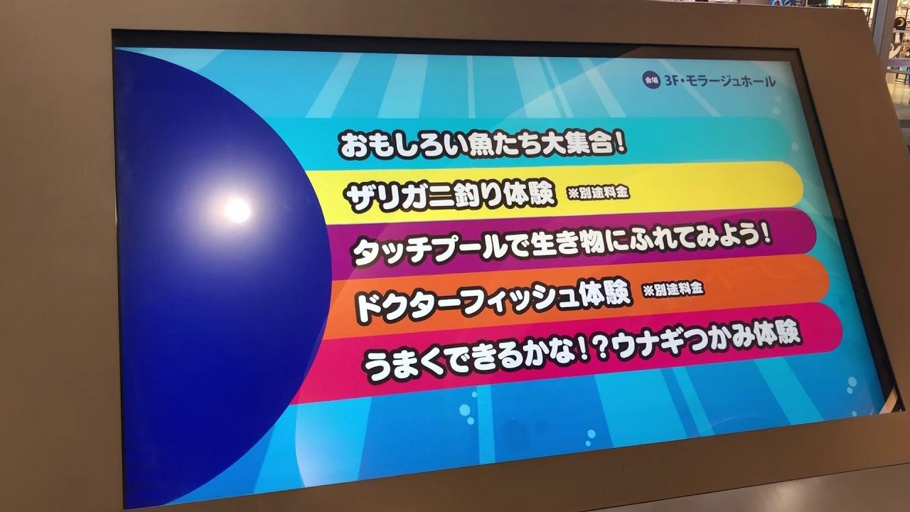 モラージュ菖蒲今年はおもしろ水族館!
