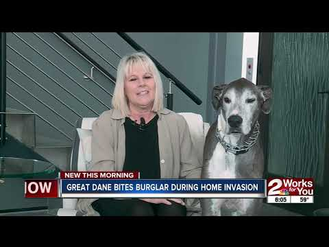 MORNING NEWS - Great Dane Takes a Bite Out of Criminal! VIDEO!