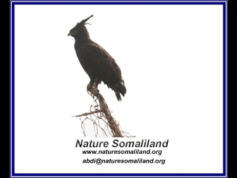 NatureSomaliland is a non-profit organization based in Harge