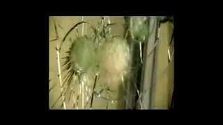 видео Бронированные шлюзовые кабины