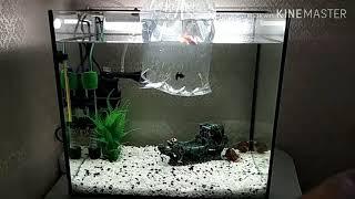 Первые аквариумные рыбки. Гуппи. Запускаем рыбок в аквариум.