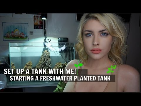 I'M STARTING A FRESHWATER PLANTED TANK! (Tutorial)