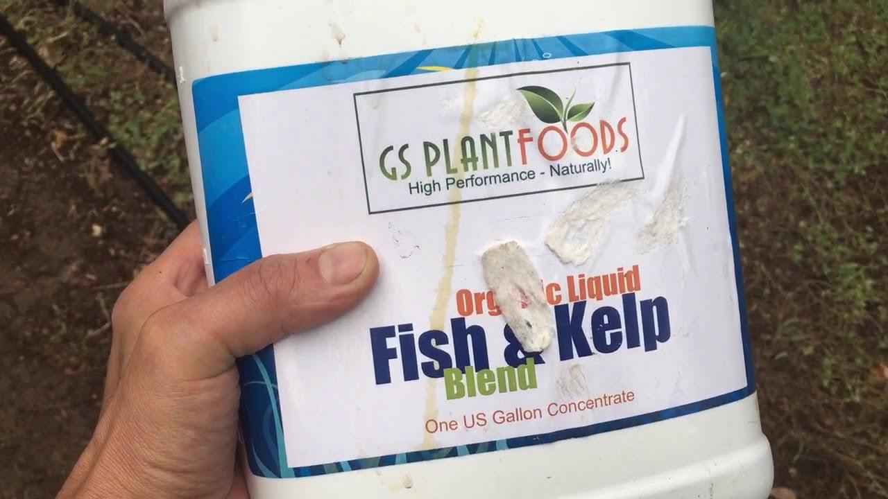 GS plants-organic liquid kelp and fish blend plant Fertilizer review