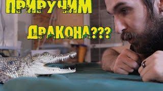 видео Террариум для крокодила