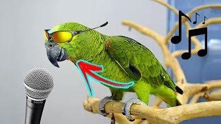 Os Papagaios Mais Engraçados Tente Não Rir