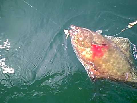 Catching Halibut In Puget Sound's Hein Bank