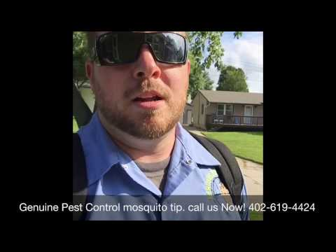 Get rid of mosquitoes Omaha - Genuine Pest Control