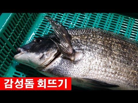한국 시장 음식-노량진수산시장 감성돔 1.5kg �