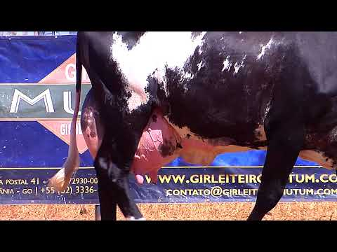LOTE 66   1222BS