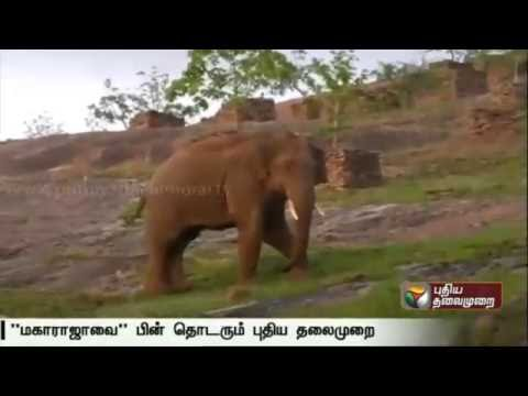Mission Madukari Maharaja: Forest officials search for rogue elephants