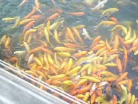 Nuvali Video Tour Sta.Rosa,Laguna