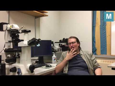 Matrix Dynamics Lab Testimonial by Peter