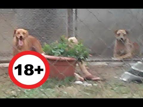 Állatkínzás: Kankutyákkal szexelt az állatotthonba többször betörő zoofil férfi letöltés