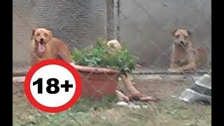Állatkínzás: Kankutyákkal szexelt az állatotthonba többször betörő zoofil férfi