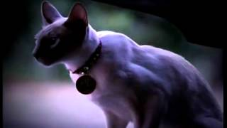 Charmed 2 New Generation Opening Credits