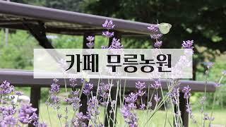 [카페 무릉농원] 공주 정원카페 / 무릉도원 아닙니다 …