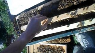 Year of BeeKeeping Episode 22, Lets see what the damage is...