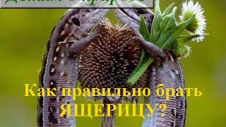 Пресмыкающиеся животные ❦ Ящерица ❦ Как ухаживать за ящерицей?