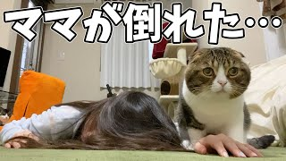 I tried to observe the cat's reaction when the owner suddenly fell.