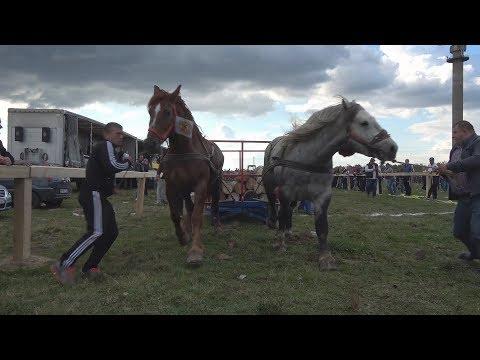Concurs cu cai de tractiune, proba de dublu Baia Mare, Maramures 7 oct 2017