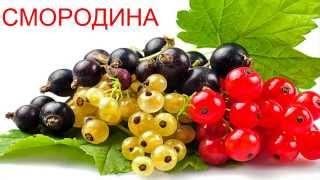 Учим слова (Овощи фрукты и ягода)