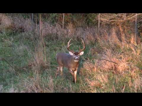 WORLDS LARGEST 6 POINT WHITETAIL!!!