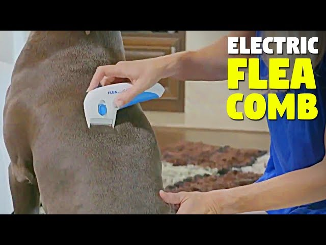 Electric Flea Comb For Dogs
