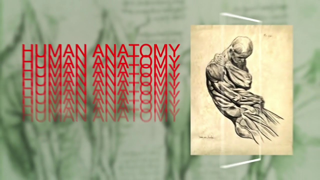Human Anatomy Renaissance Youtube