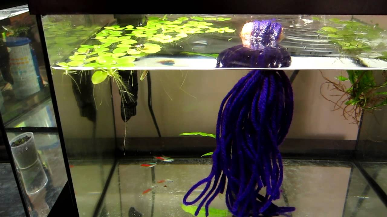 ATTEMPT TO BREED NEON TETRAS. initial setup.   YouTube