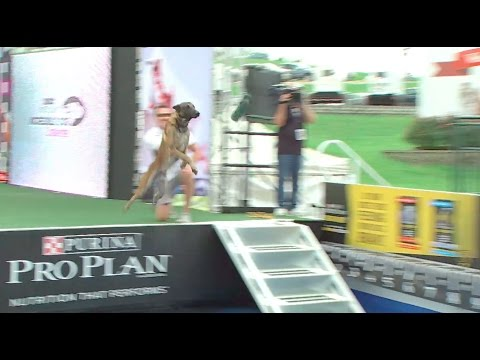 Full Diving Dog Competition - 2016 Purina® Pro Plan® Incredible Dog Challenge® National Finals