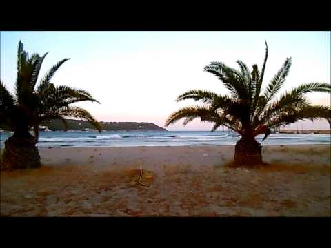 Sounds of the nature: Mediterranean Palms. Aegina island, Greece