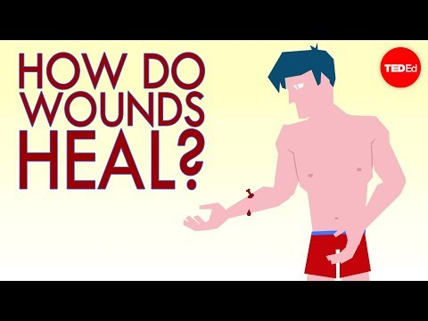 How a wound heals itself - Sarthak Sinha