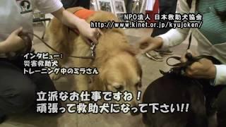 黒パグナイトがPet博2009幕張をワンワンレポート♪介助犬、聴導犬、セラ...