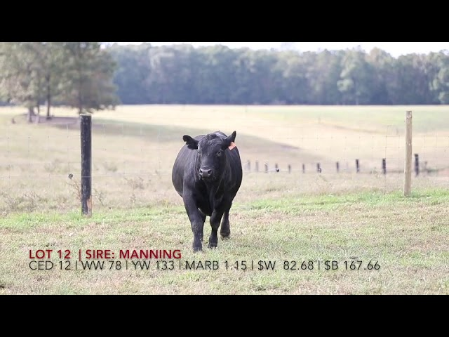 Edgewood Angus Lot 12