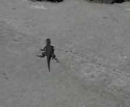 Feeding the Yard Lizards - YouTube