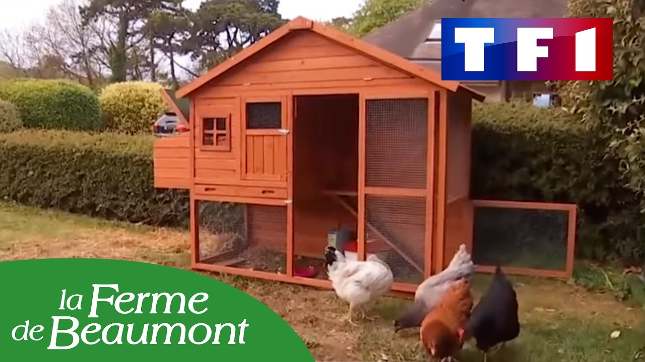les poules de la ferme de beaumont dans le 20h de tf1 youtube. Black Bedroom Furniture Sets. Home Design Ideas