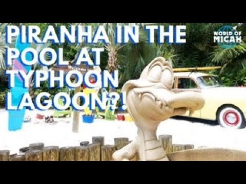 Miss Adventure Falls and Piranha in Pool at TYPHOON LAGOON! (WORLD OF MICAH)