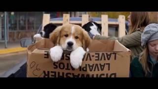 Лучший фильм про собаку.Собачья жизнь 2017   Трейлер