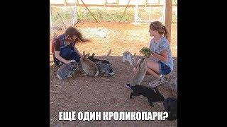 Еще один #кроликопарк?