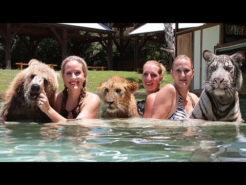 Lion Tiger And Bear Unlikely Trio Of Wild Friends Live Swim Together At Myrtle Beach Sanctuary You