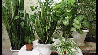 Самые неприхотливые растения которые растут в нашем доме